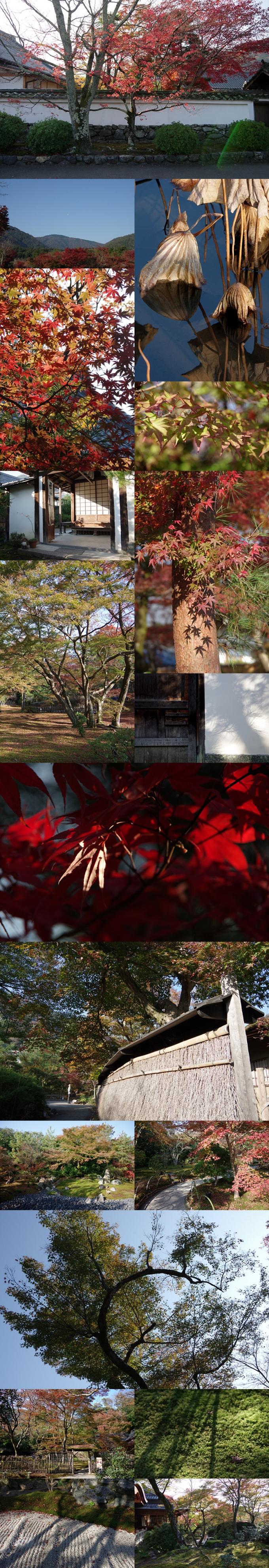 WP_momiji_arashiyama_1