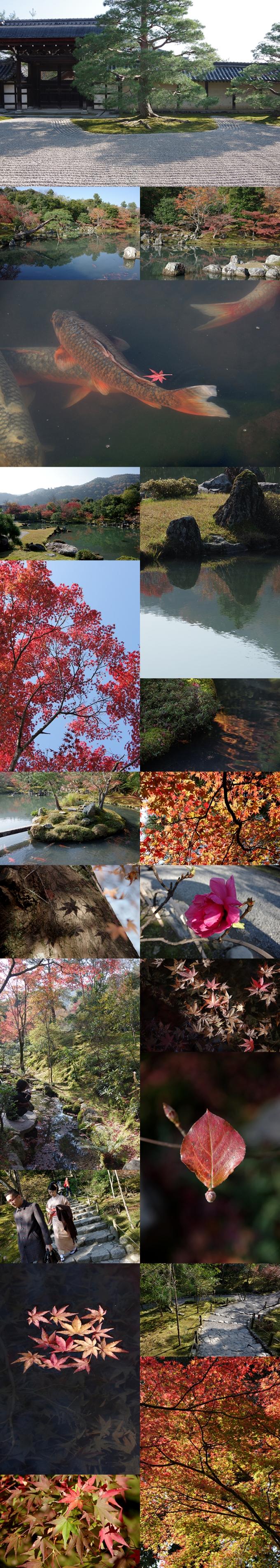 WP_momiji_arashiyama_3