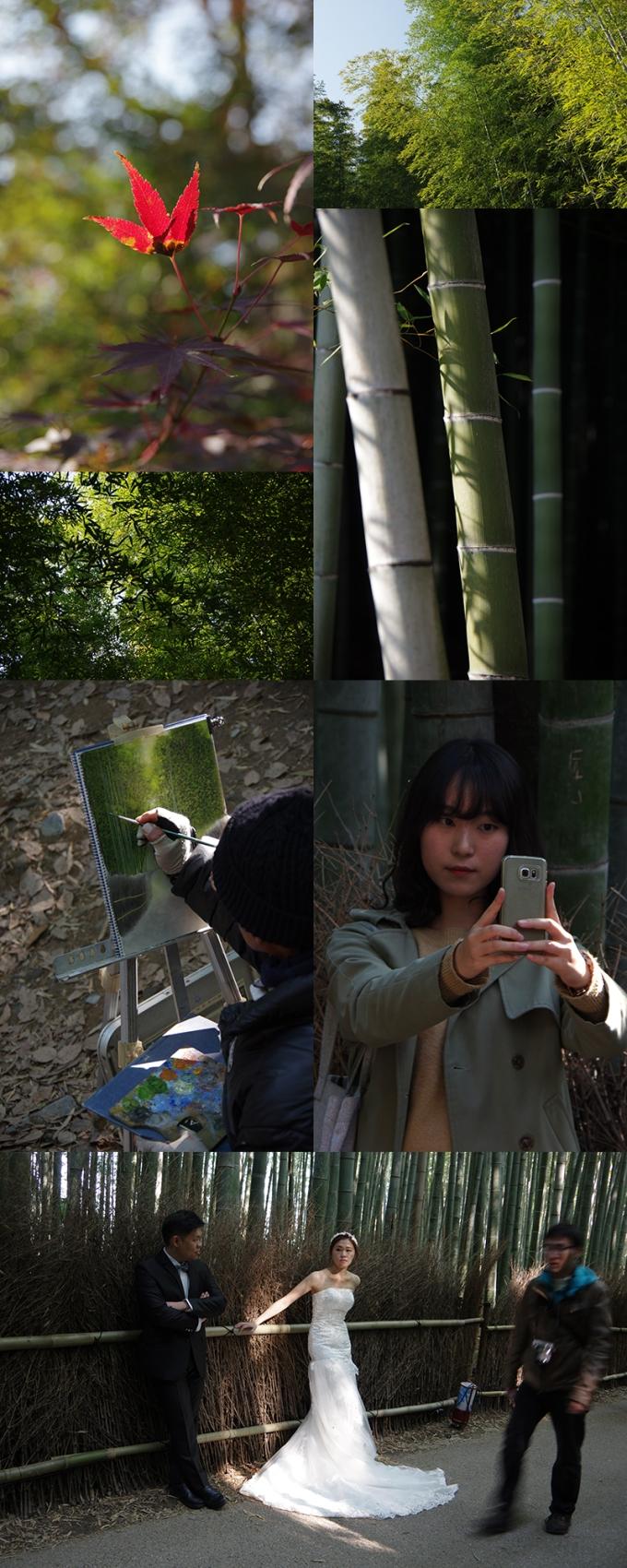 WP_momiji_arashiyama_4