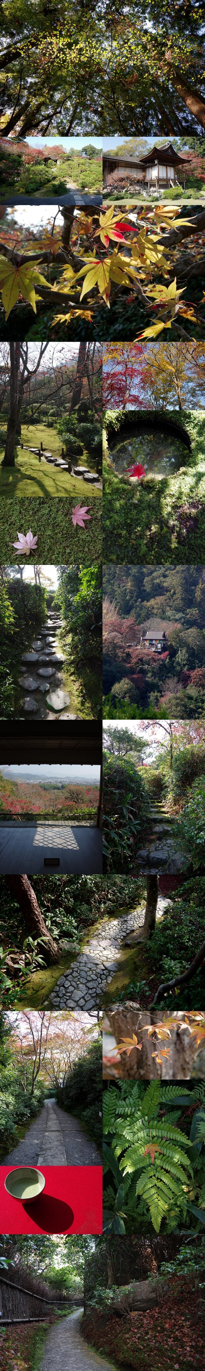 WP_momiji_arashiyama_5